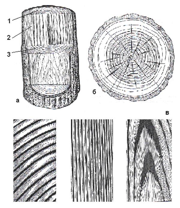 разрезы ствола дерева ( 1